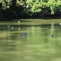 Photos: 桜ヶ池