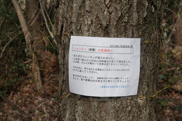 富幕山盗掘案内版が貼って有りました。