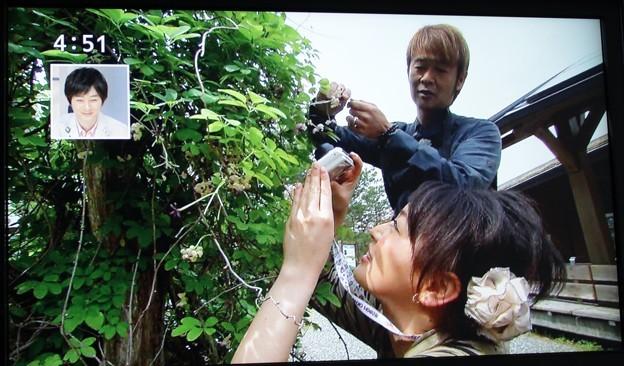 以前SBSテレビイブニングeye番組でアケビの花撮影中の小沼みのりさんと鉄崎幹人さん