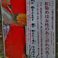 Photos: 万葉集:ベニバナ(紅花) キク科 古名:くれなゐ(紅)