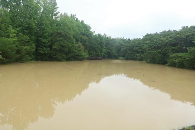 森林公園 前夜の雨で・・西ノ谷奥池