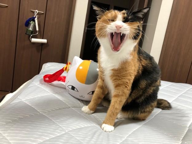 ポップコーンBOXと猫