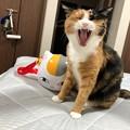Photos: ポップコーンBOXと猫