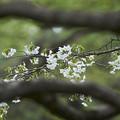 写真: 春のお散歩