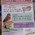 Photos: アイヌ相談チラシ(6月24日)