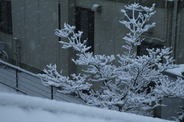 雪景色_守谷 D6371