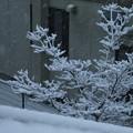 写真: 雪景色_守谷 D6371
