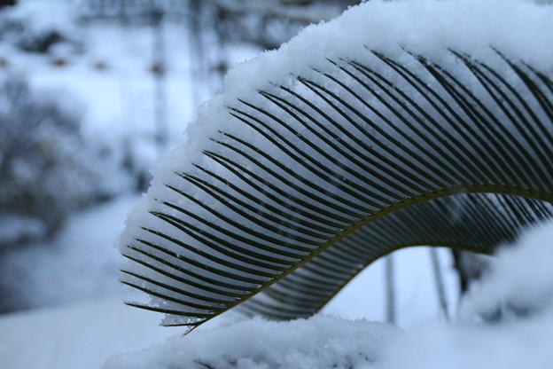 雪景色_守谷 D6381