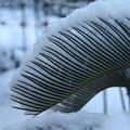写真: 雪景色_守谷 D6381