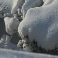 キラ_雪景色 D6406