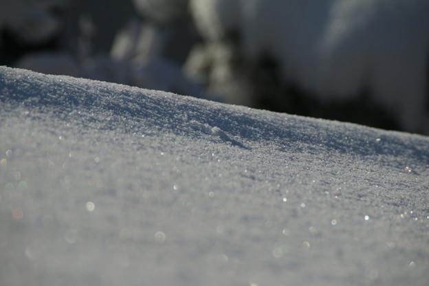 写真: 雪景色_守谷 D6404