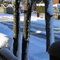 Photos: 雪景色_守谷 D6413