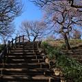 写真: 梅園_公園 D6730
