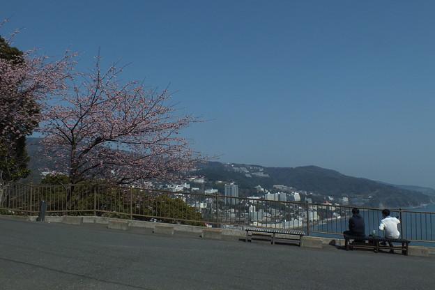 桜_熱海 F1838