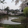 桜_公園 D6904