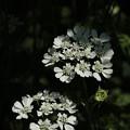 花壇の花 D7349