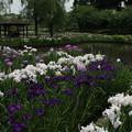 四季の里_公園 D7682