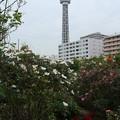 Photos: マリンタワー_横浜 D8656