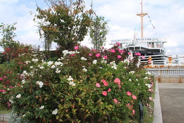 薔薇と_横浜 D8852