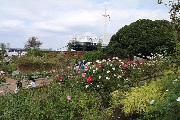 薔薇と_横浜 D8858