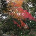 紅葉_植物園 D9115