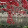 紅葉_植物園 D9116