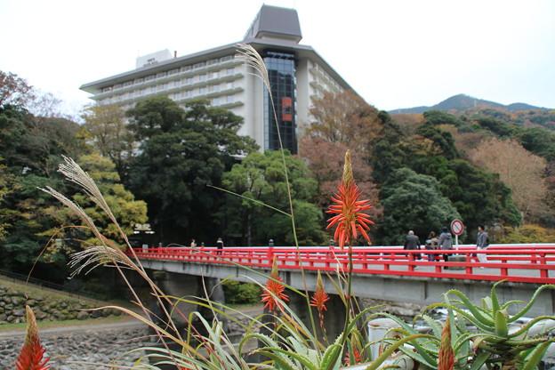 富士屋とアロエ_箱根 D9126