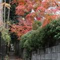 紅葉_箱根 D9153