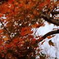 紅葉_箱根 D9158