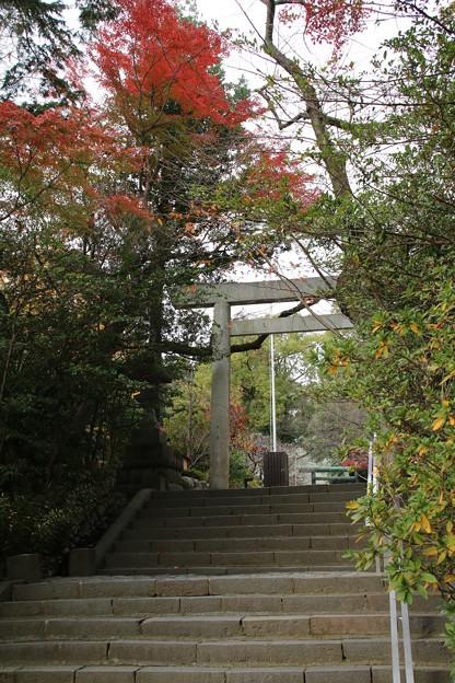 二宮神社 _小田原 D9211
