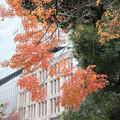 Photos: 紅葉_日比谷 D9293