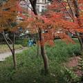 Photos: 紅葉_日比谷 D9297