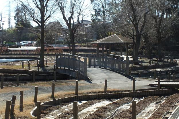 冬景色_公園 F3367