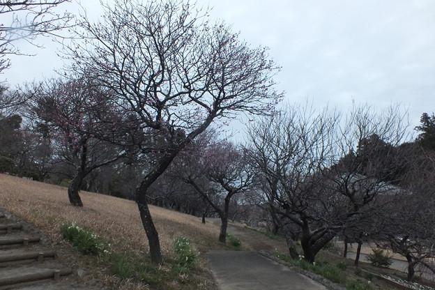 花_公園 F3459