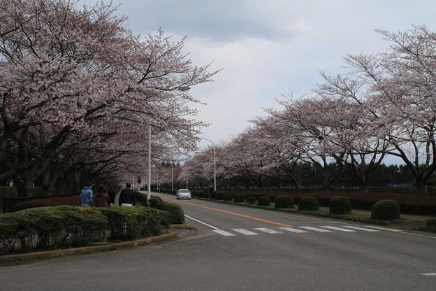 桜_学園 D0599