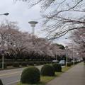 桜_学園 D0603