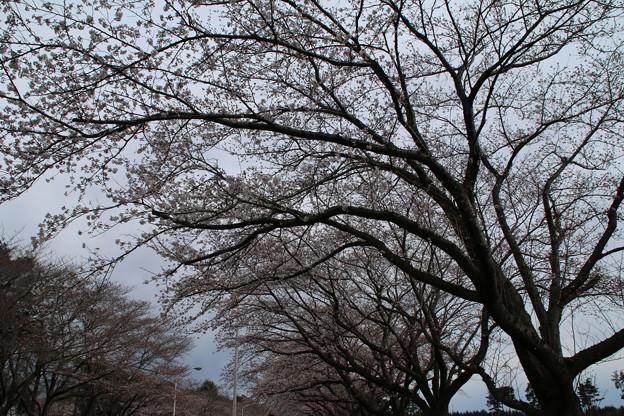 桜_学園 D0607