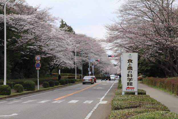 桜_学園 D0609
