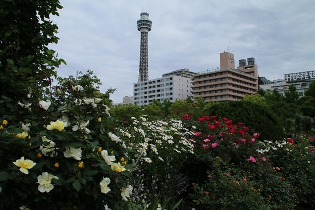 薔薇と_横浜 D1433