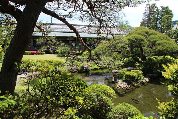 日本庭園_帝釈天  D1210