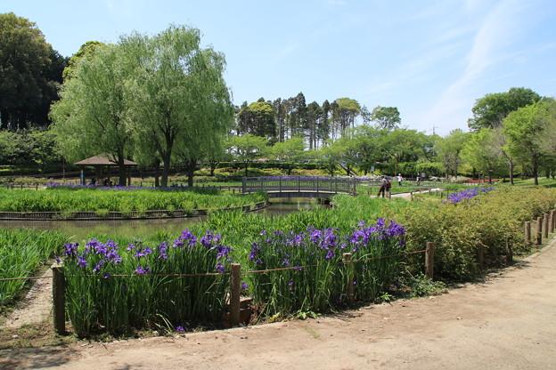 四季の里公園 D1322