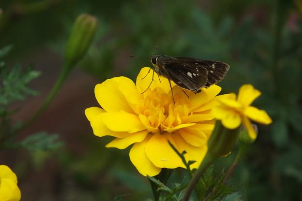 蝶と_公園 F3681