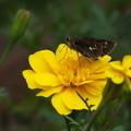 Photos: 蝶と_公園 F3681