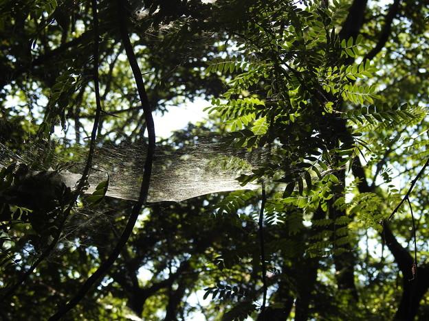 DSCN6159蜘蛛のベット2