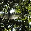 写真: DSCN6159蜘蛛のベット2