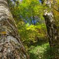 Photos: 秋日和の森