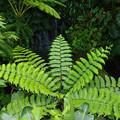 Photos: 熱帯の森