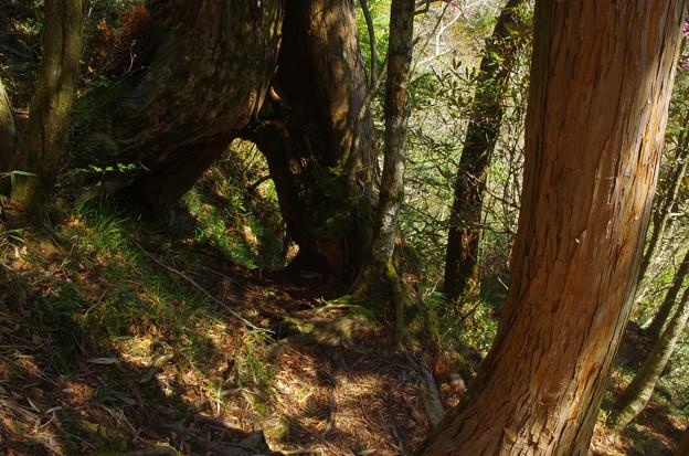 Photos: 山のトンネル