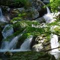 写真: 落水の沢
