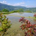 写真: 山の水田